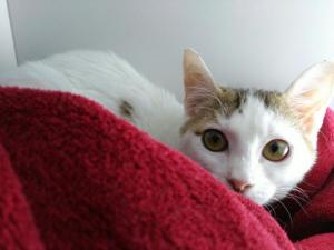 KARA (pre-adoptada)