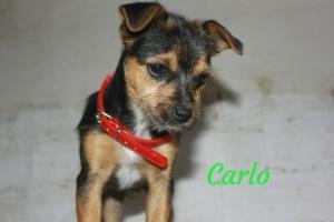 Carlo (reservado)