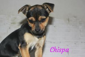 Chispa (reservada)