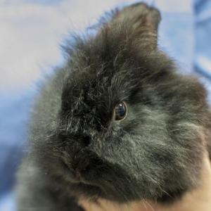 Bunny (preadoptado)